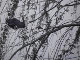 Blue Birds teasing me