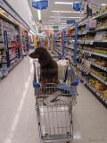 at the Walgreens