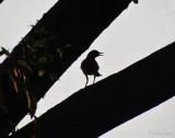 Bird in Shadow -