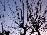 9 January 2008 Damn Tree