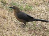 Bird at J in the B Drive Thru 17