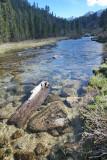 Rock Creek Stream  IMG_8446.JPG