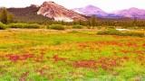 Tuolume meadow  CRW_39.jpg