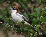Birds of Extremadura, Spain