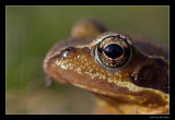 6395 frog