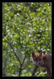 3611 fox