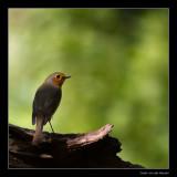 5379 robin in spotlight