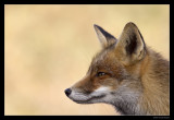2617 fox