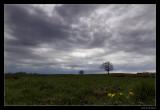 7003 Oude oever voorjaar