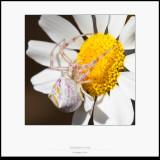 Arañas - Macro foto