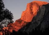 Alpine glow of  Half Dome from  meadow in Yosemite Valley #1773