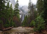 Lower Yosemite Falls View from path to it, in rain.  Day 2. S95. #3690.