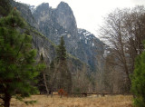 Sentinel Rock area. Cook's Meadow. #3762