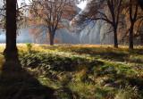 Sunrise - meadow #2771