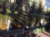 Merced River, reflections and shadows.  #2776