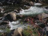 Merced River going by Yosemite View Lodge, El Portal #2858