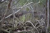 mangrooves