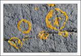 Lichen Graffiti