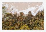 Seaweed Coastline in Minature