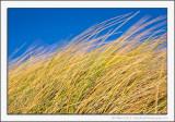 In the Grassy Dunes