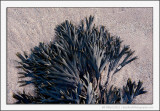 Seaweed Patterns