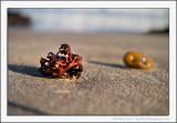 Seaside Curios