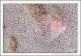 Shells and Bubbles