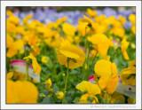 Garden Centre Flowers
