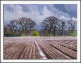 Steaming Fields