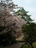 Donjon and sakura, Nagoya-jō