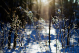 01/15/2012 - _MG_4877.jpg