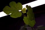 03/09/2012 - _MG_5327.jpg