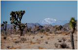 It was amazing to stand in the desert and see snow in the background