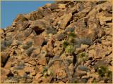 Strolling on the rocks