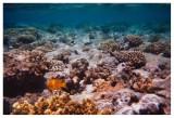 Under Water - IX