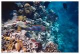 Under Water - IV