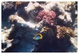 Under Water - II