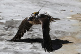 High-Tech Peregrines