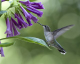 2012 Hummingbirds