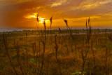Siesta Beach, FL