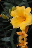 Botanicals Art Exhibition 2012
