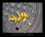 manhole_cover_series