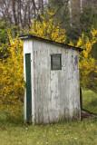 Forsythia & Outhouse
