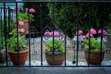 My Aunt's Front Garden