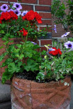 A Crock of Annuals