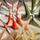 Traffic Cones /reflection/