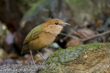 Gallery of Wild Birds