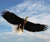 north_american_birds