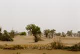 Taklamakan Desert ��J�Ժ��F�F�z