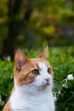 18/5 Lisa, Heimers cat
